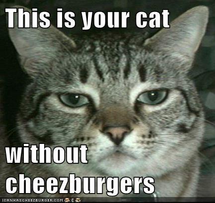 Cheezburger Image 5583681792