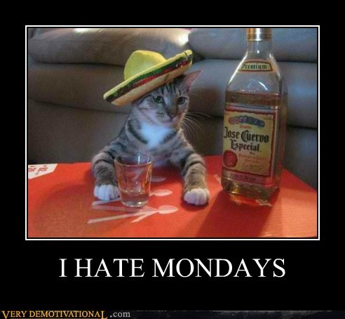cat,drunk,hilarious,mondays,sombrero,tequila