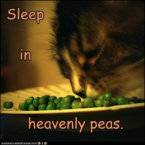 caption captioned cat christmas heavenly literalism peace peas pun silent night sleep sleeping song