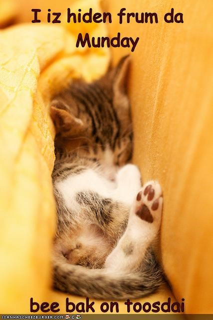 asleep,back,be,caption,captioned,cat,do not want,hiding,kitten,monday,return,sleeping,tuesday