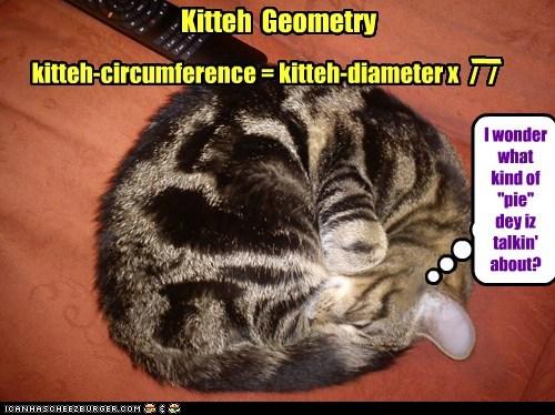 "kitteh-circumference = kitteh-diameter x / / / Kitteh Geometry I wonder what kind of ""pie"" dey iz talkin' about?"