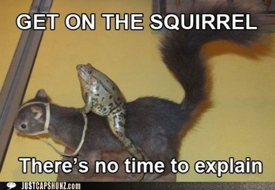 animals,frog,get on,no time to explain,squirrel,taxidermy,wtf