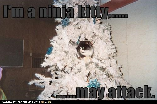 I'm a ninja kitty......  ......may attack.