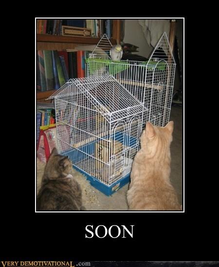 animals bird cat hilarious wtf - 5585783040