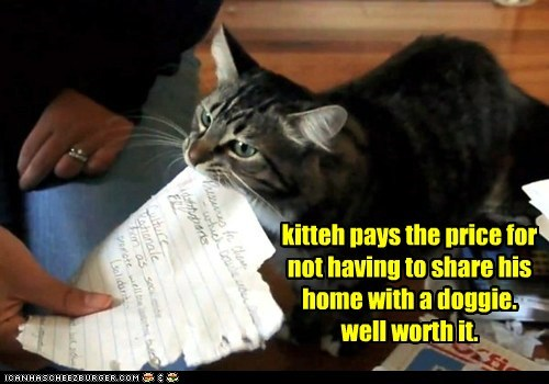 kitteh pays the price for not having to share his home with a doggie. well worth it.