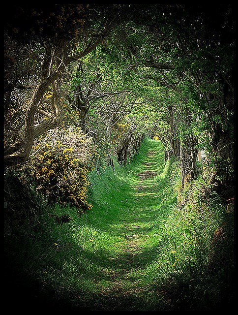 canopy,Forest,getaways,green,Hall of Fame,nature,path,pathway,unknown location