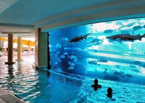 getaways Hall of Fame hotel las vegas Nevada north america pool united states - 5587038464