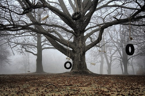autumn,fog,getaways,mist,tire swings,tree,trees,unknown location