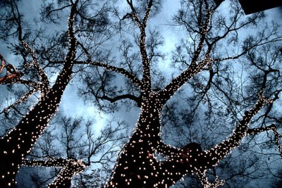 christmas,christmas lights,getaways,lit up,trees,unknown location