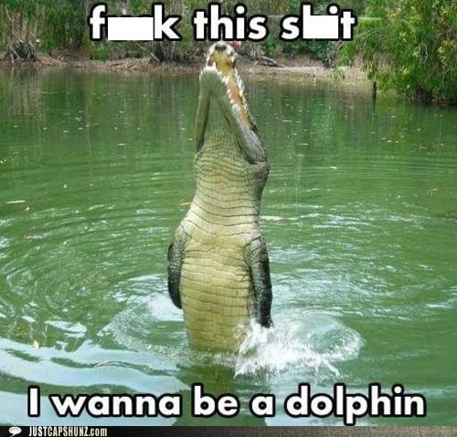 alligator animals dolphin - 5587459840