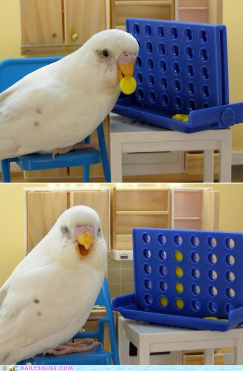 acting like animals bird bored challenge connect four game parakeet too easy winner - 5587736832