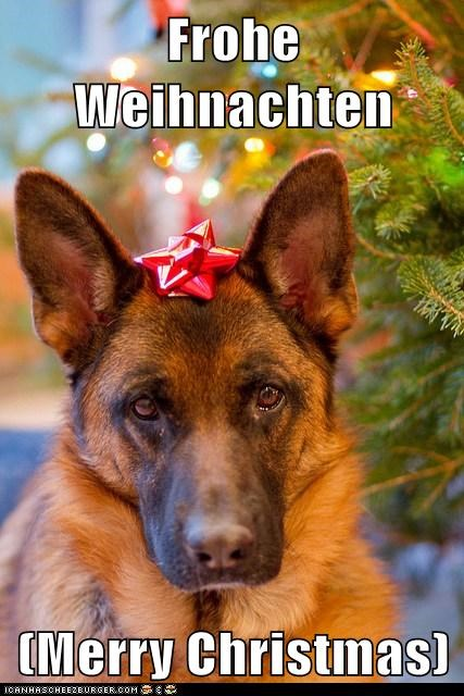 best of the week christmas Frohe Weihnachten german german shepherd Hall of Fame merrry christmas - 5587824384