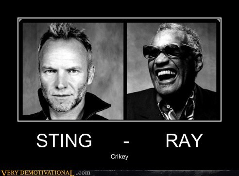 ray charles,Sad,steve irwin,sting