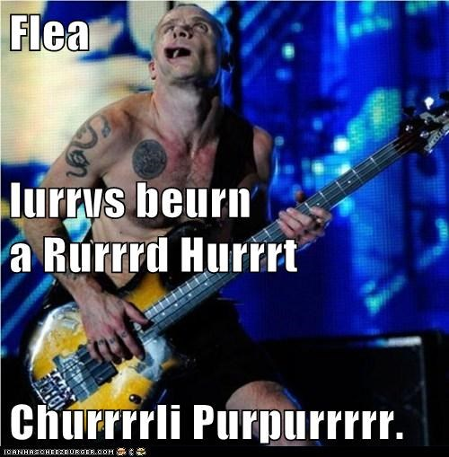 bass derp flea Music red hot chili peppers - 5588087040