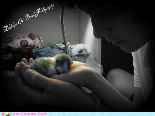best ever cat coincidence kitten litter mother reader squees - 5588128768