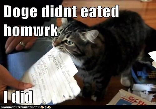 Doge didnt eated homwrk  I did