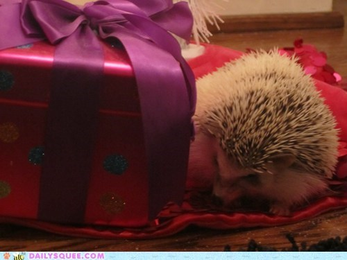 belated,christmas,hedgehog,perfect,present,reader squees,size