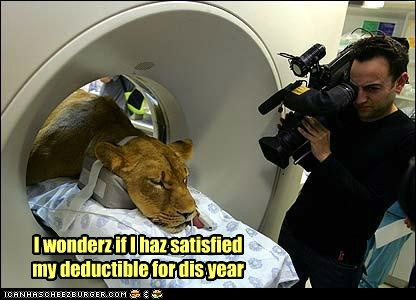 animals,deductible,health insurance,lion,lionness,MRI