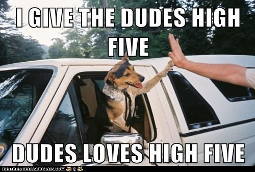 animals awesome dogs high five i gave that i has a hotdog