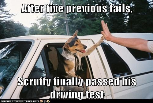 After five previous fails, Scruffy finally passed his driving test