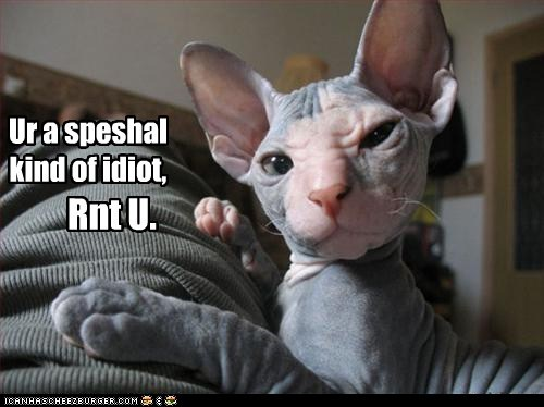 best of the week cat critical criticizing hairless cat Hall of Fame I Can Has Cheezburger idiot insult insulting stupid stupid human - 5589768448