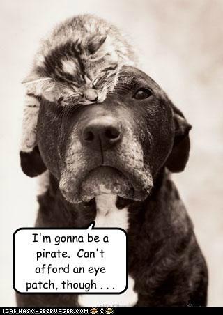 animals cat dogs eye patch i has a hotdog kitten Pirate - 5589788416