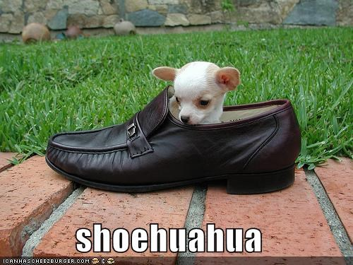 chihuahua puppy shoes - 558985984