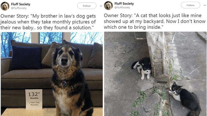 aww pet ownership twitter cute stories - 5590021