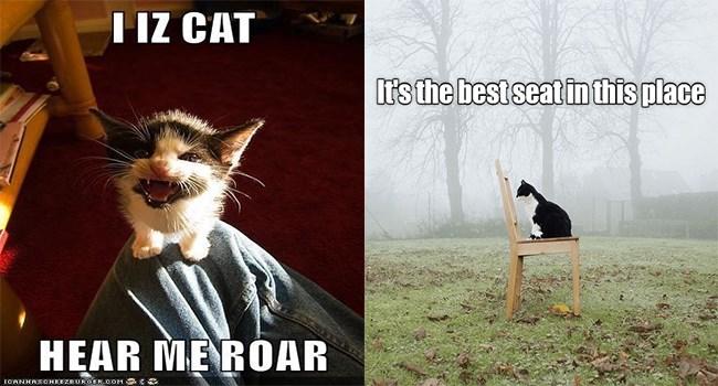 lolcats funny memes kitten cute Memes Cats funny cat memes - 5591301