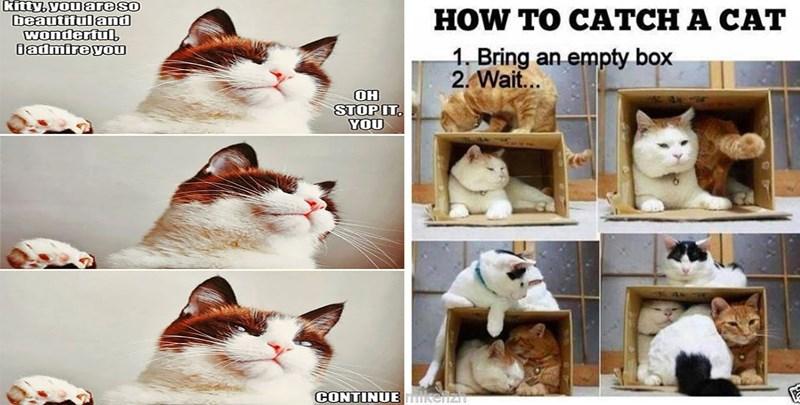 caturday memes funny memes Memes Caturday Cats cat memes - 5591557