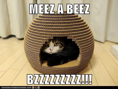 bed bee beehive best of the week buzz buzzing caption captioned cat impersonating impersonation impression shape - 5591693824