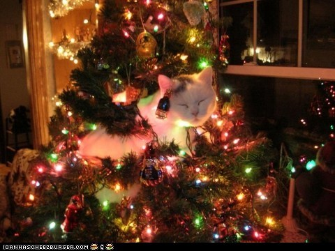 advent calendar christmas christmas tree cyoot kitteh of teh day get out get out of there cat holidays naughty sleeping - 5591896064