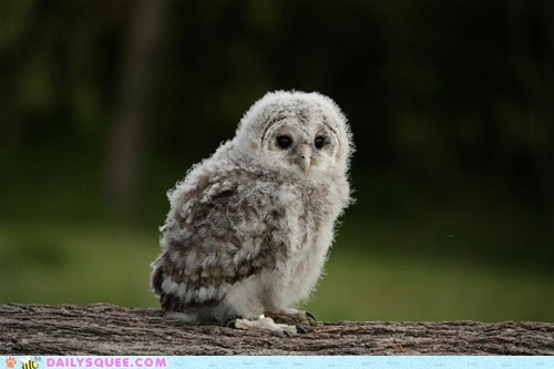 encore,Owl,owlet,owlets,owls,runner up,squee spree