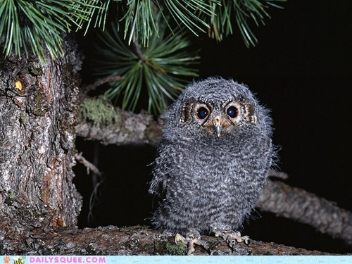 baby,limb,Owl,owlet,pun,squee spree,standing,tree