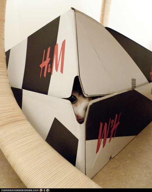 boxes boxing day cyoot kitteh of teh day hm hiding holidays peeking - 5592291584