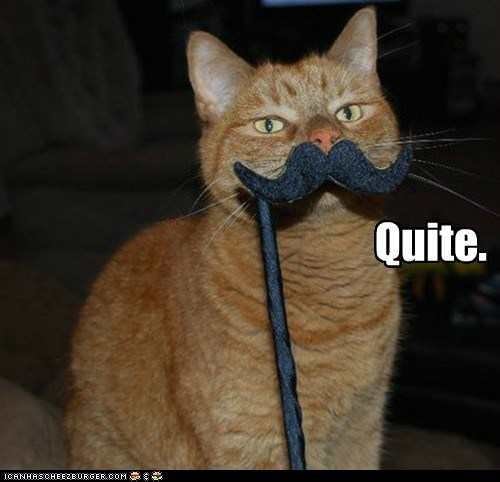 best of the week cat Hall of Fame I Can Has Cheezburger mustache quite - 5592412928