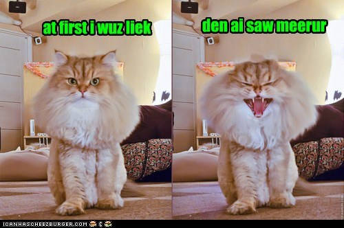 at first but then caption captioned cat laughing mane mirror poofy reflection - 5592448768