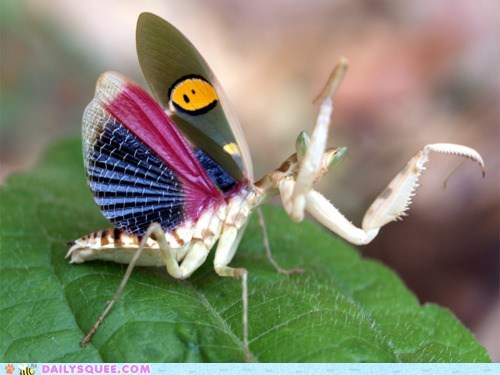 mantis,praying mantis,insect,creepicute,squee