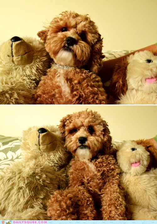 dogs,Fluffy,impersonating,impersonation,mistake,resemblance,stuffed animal,teddy bear