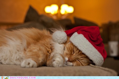 cat,christmas,christmas eve,costume,dressed up,pun,santa claws,sleeping,tabby,tired,twelve squees of christmas