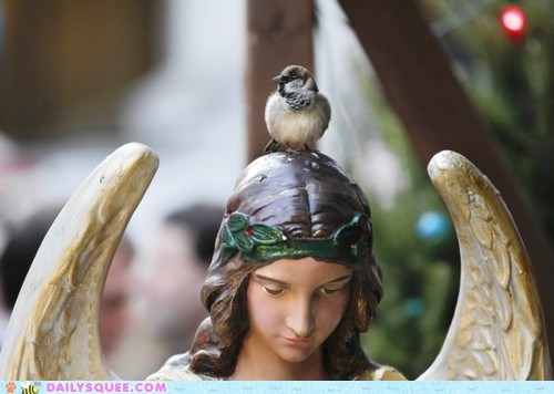 acting like animals angel bird halo impersonating impersonation lolwut standing statue - 5593163776