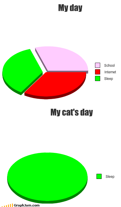 cat pets Pie Chart sleep