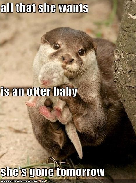 All That She Wants Is An Otter Baby Shes Gone Tomorrow
