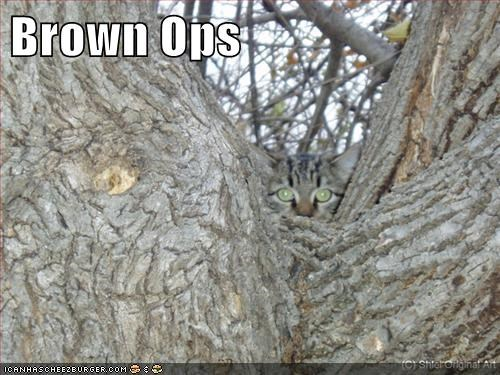 black ops blending in brown camouflage caption captioned cat ops pun spying - 5594578944