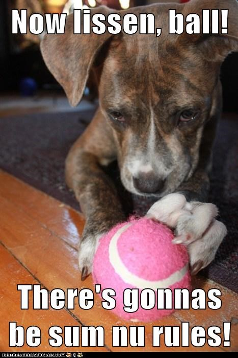 ball,mixed breed,pit bull,pitbull,rules,tennis ball