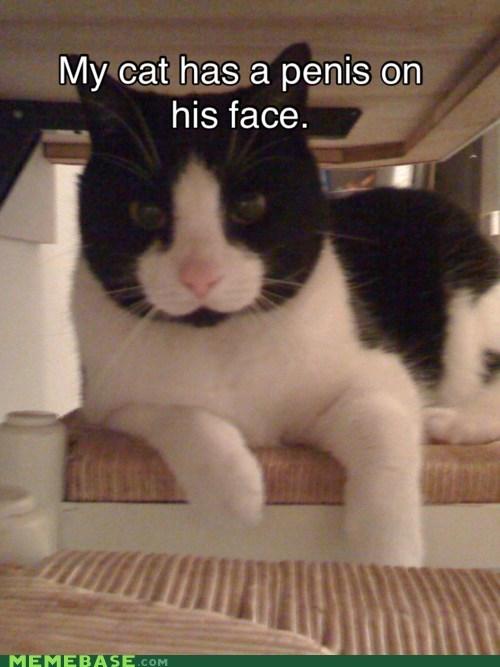 Cats gross Memes - 5594994176