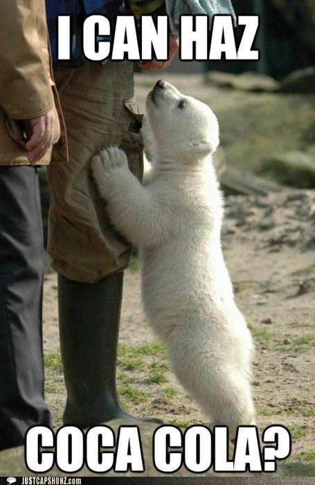 animals baby polar bear christmas coca cola polar bear - 5595120128