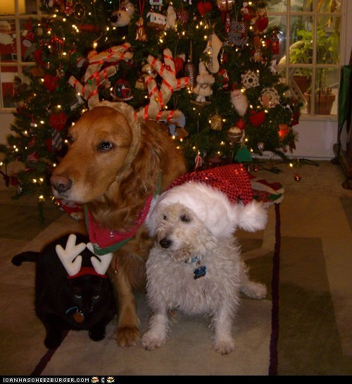 christmas costume do not like dogs dressed up goggies goggies r owr friends holidays kill me not happy - 5595443968