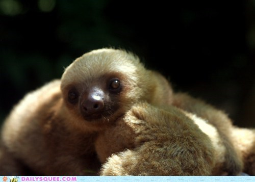 baby close up discovery expression face happy hello introduction posing sloth smiling squee spree