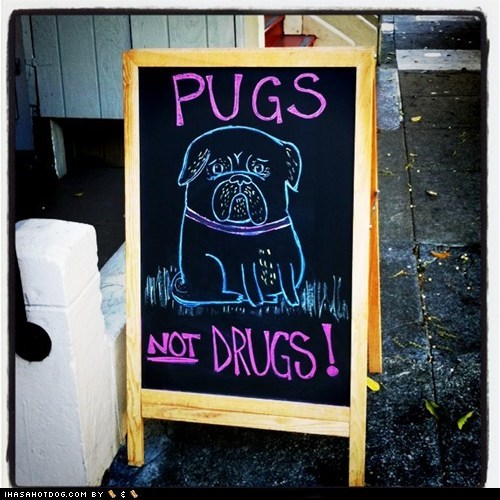 awesome pug pugs not drugs - 5595962368